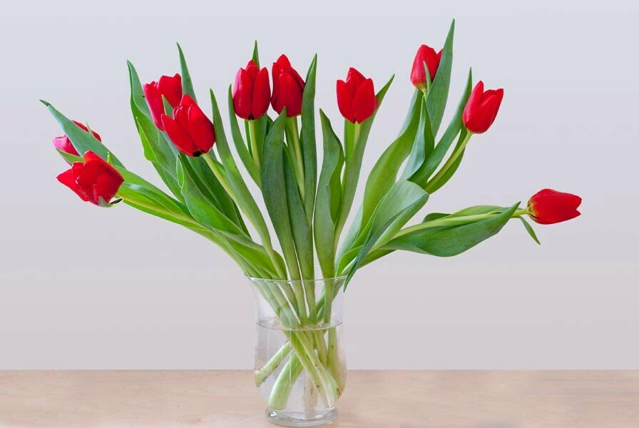Red tulips in a glass vase on a blond wood table