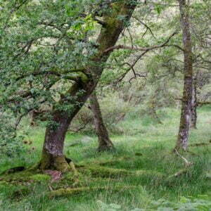 Trees amid moss covered ground