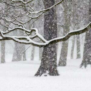 Tree branch laden with snow on snow covered ground