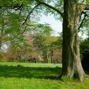 Deciduous trees in Park in Leeds, Yorkshire, England
