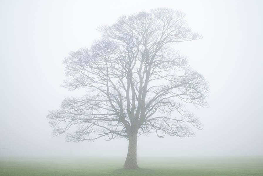 Lone tree in mist on Soldier's Field in Leeds, Yorkshire, England