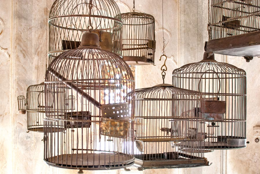 Empty birdcages hanging in a room with sunlight filtering in through a window and highlighting the cages