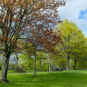 Trees in a park with undulating land and a beckoning park bench