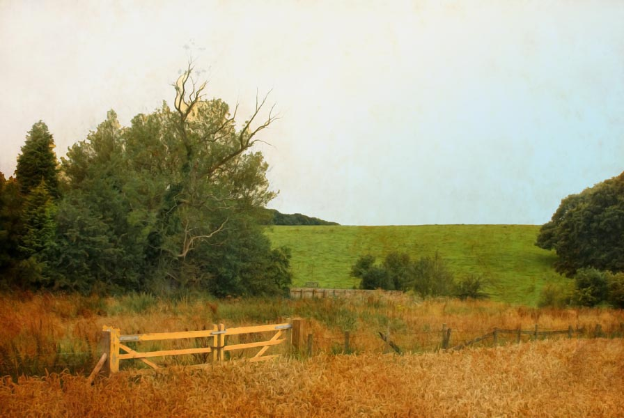 Wheat field, fence, and trees on the outskirts of Leeds in Yorkshire, England
