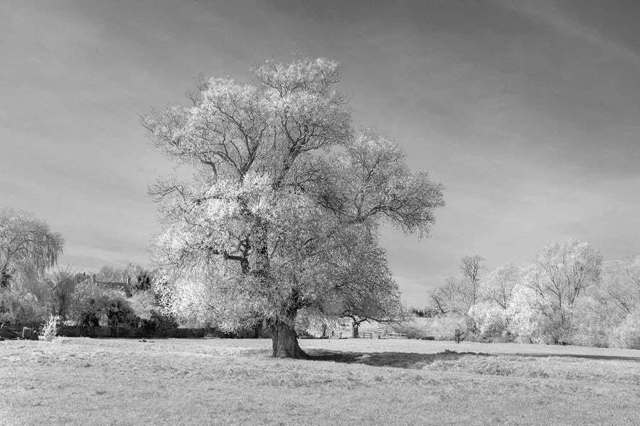 Willow tree on a river bank - rendered in black and white