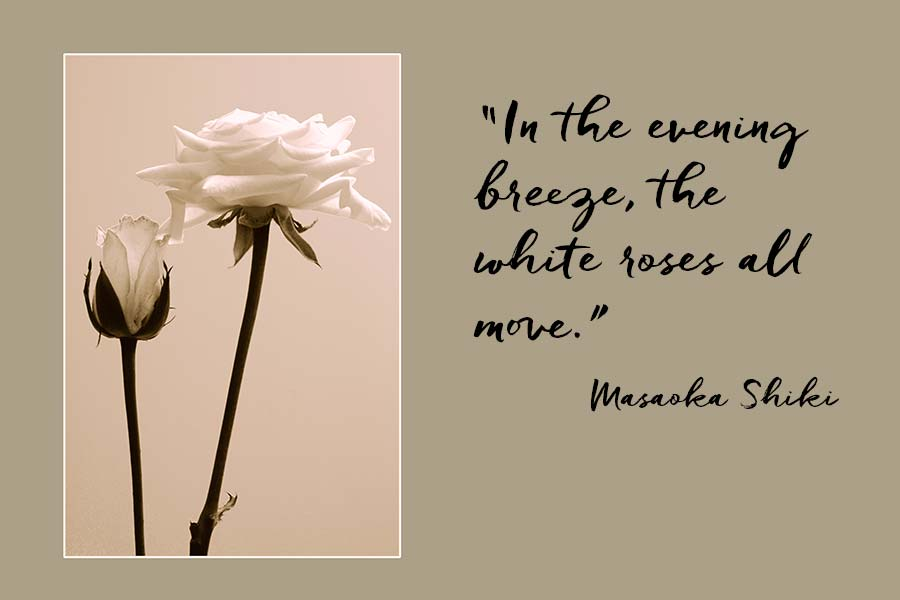 """White roses with a quotation from Masaoka Shiki """"In the evening breeze, the white roses all move."""""""
