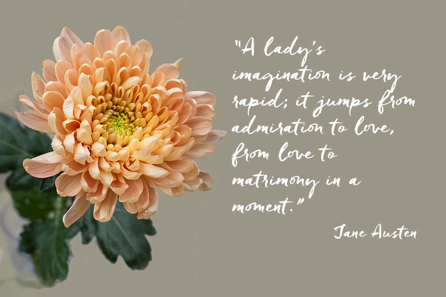 """A chrysanthemum flower head, with a quotation from Jane Austen """"A lady's imagination is very rapid; it jumps from admiration to love, from love to matrimony in a moment."""""""