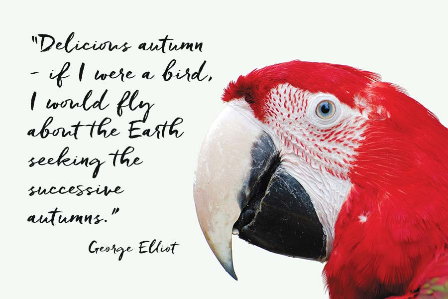 """Macaw with quote by the writer George Elliot """"Delicious autumn - if I were a bird I would fly about the Earth seeking the successive autumns."""""""