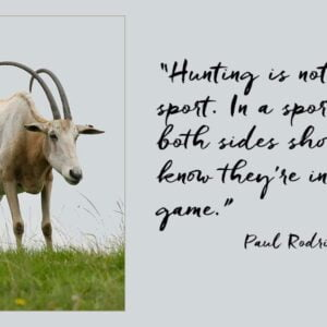 """Scimitar-horned Oryx with quotation from Paul Rodriquez """"Hunting is not a sport. In a sport both sides should know they're in the game."""""""