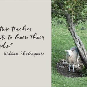 """White faced sheep in a dip standing by a twisted, leaning tree with a quotation from William Shakespeare """"Nature teaches beasts to know their friends."""""""
