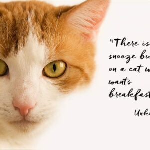 """A close-up of a ginger and white cat looking to camera and a quotation from an unknown author - """"There is no snooze button on a cat who wants breakfast."""""""